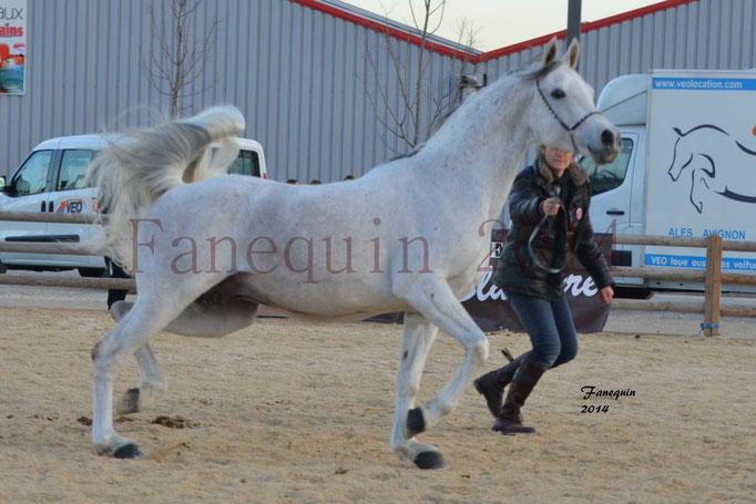 Etalon d'Endurance gris 15