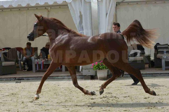 Championnat de FRANCE des chevaux ARABES à Pompadour - PEARL DE DJOON - Notre Sélection - 09