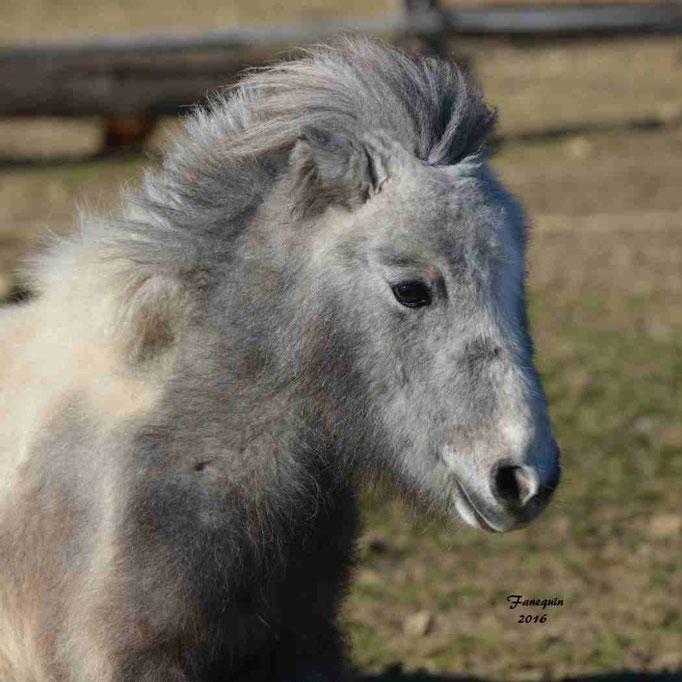 Elevage EL MAGLEP - Groupe de poneys - En Liberté - 21