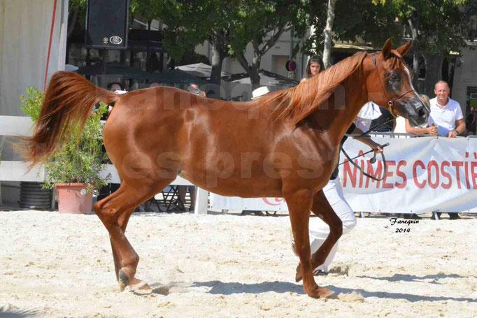 Concours national de Nîmes - MYSS SASKIA - Notre Sélection - 03