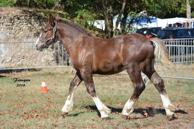 Fête du cheval à GRAULHET le 16 septembre 2018 - Concours Départemental de chevaux de traits - 26