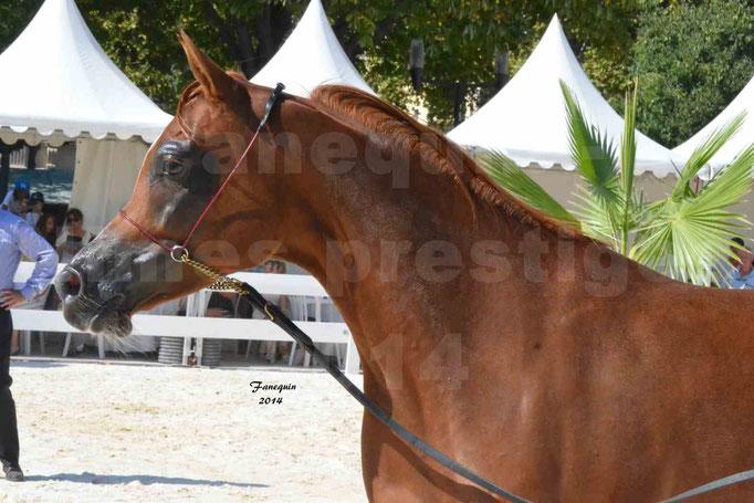 Concours national de Nîmes - MYSS SASKIA - Portraits - 05