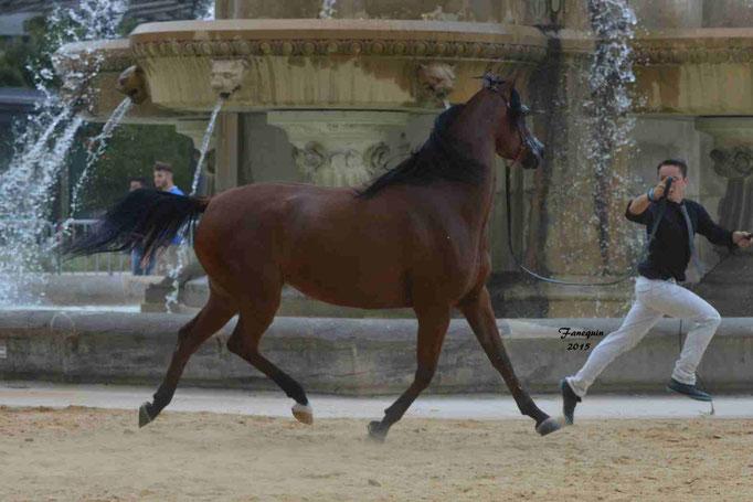 KARAWAN ALBIDAYER en 2015 - Concours national Nîmes prestige - notre sélection - 02