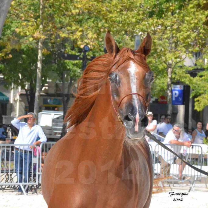 Concours national de Nîmes - MYSS SASKIA - Portraits - 01