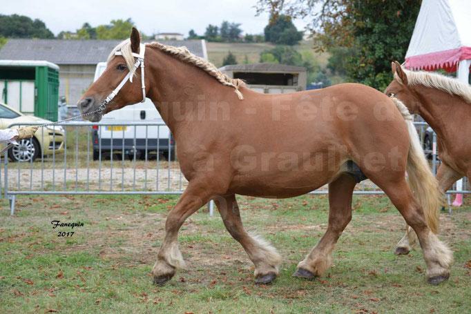 Fête du cheval à Graulhet le 17 septembre 2017 - chevaux de traits - 3