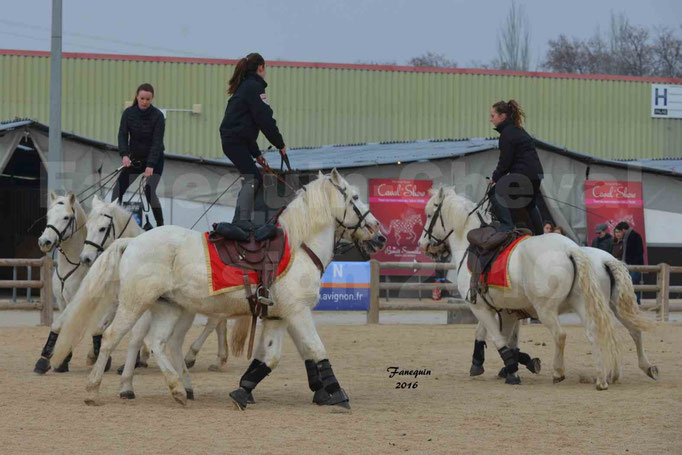 Cheval Passion 2016 - CAMARGUE poste hongroise - 5