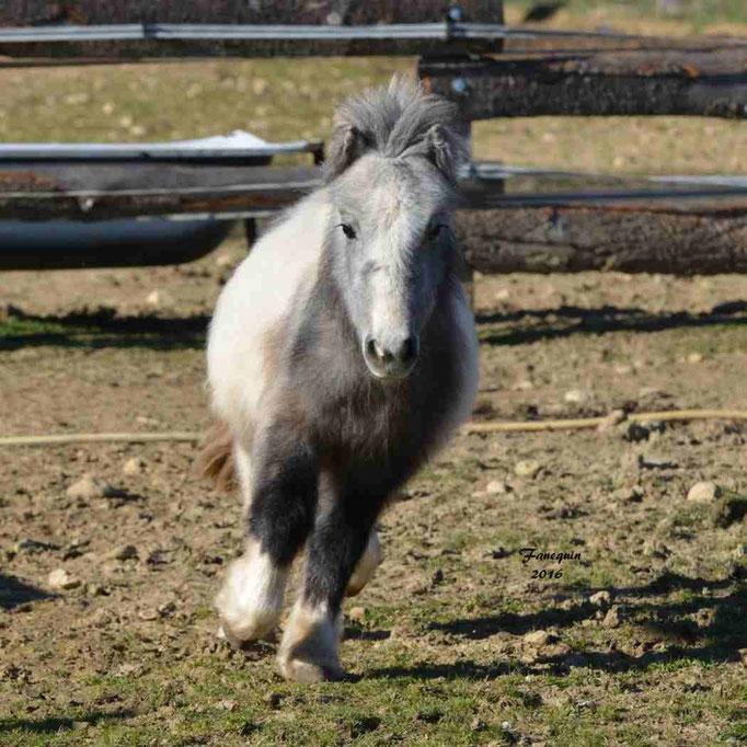 Elevage EL MAGLEP - Groupe de poneys - En Liberté - 12