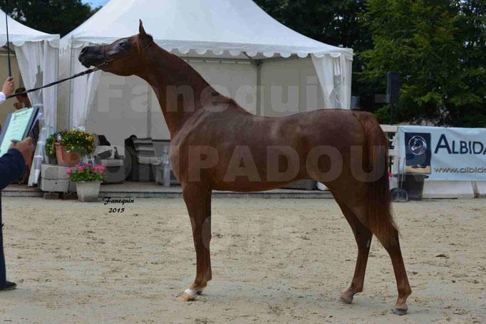 Championnat de FRANCE des chevaux ARABES à Pompadour - PEARL DE DJOON - Notre Sélection - 17