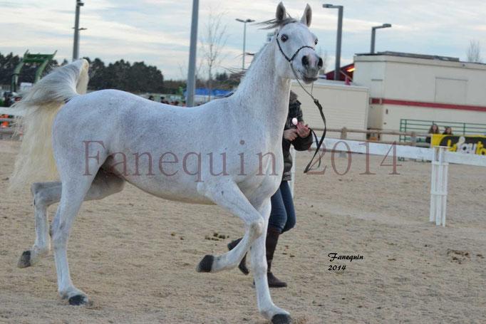 Etalon d'Endurance gris 27