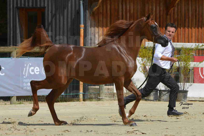 Championnat de FRANCE des chevaux ARABES à Pompadour - PEARL DE DJOON - Notre Sélection - 34