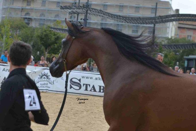 KARAWAN ALBIDAYER en 2015 - Concours national Nîmes prestige - notre sélection - Portraits - 3