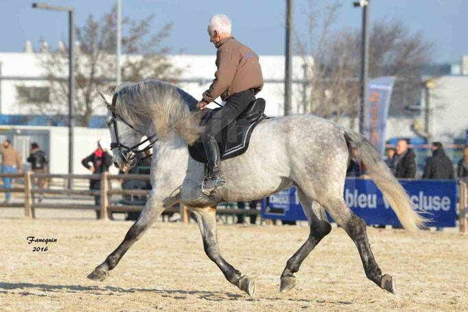 Cheval Passion 2016 - FINCA SAINT GILLES - Alain LAUZIER - cheval gris - Notre Sélection -