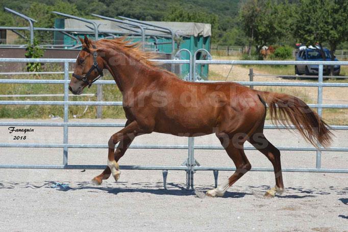 Concours d'Elevage de chevaux Arabes  le 27 juin 2018 à la BOISSIERE - 3