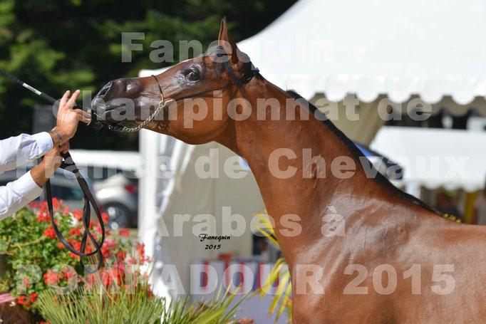 Championnat de FRANCE du cheval ARABE à POMPADOUR 2015 - Classes PROFESSIONNELS - PRIMERIUS EMER - Portraits - 6