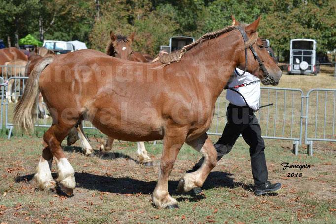 Fête du cheval à GRAULHET le 16 septembre 2018 - Concours Départemental de chevaux de traits - 32