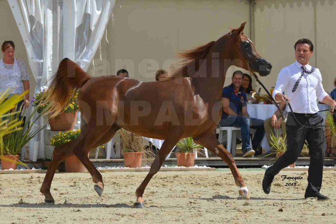 Championnat de FRANCE des chevaux ARABES à Pompadour - PEARL DE DJOON - Notre Sélection - 36