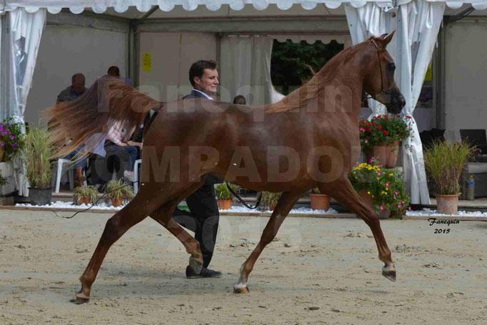 Championnat de FRANCE des chevaux ARABES à Pompadour - PEARL DE DJOON - Notre Sélection - 15