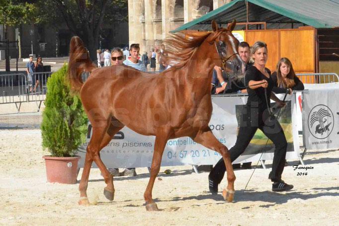 Concours national de Nîmes - MYSS SASKIA - Notre Sélection - 07