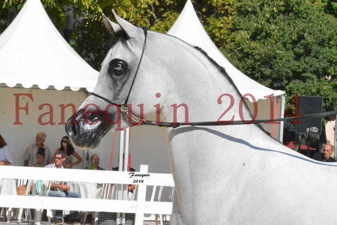 Concours National de Nîmes de chevaux ARABES 2014 - Notre Sélection - Portraits - NADJYK DES AUBUS - 1