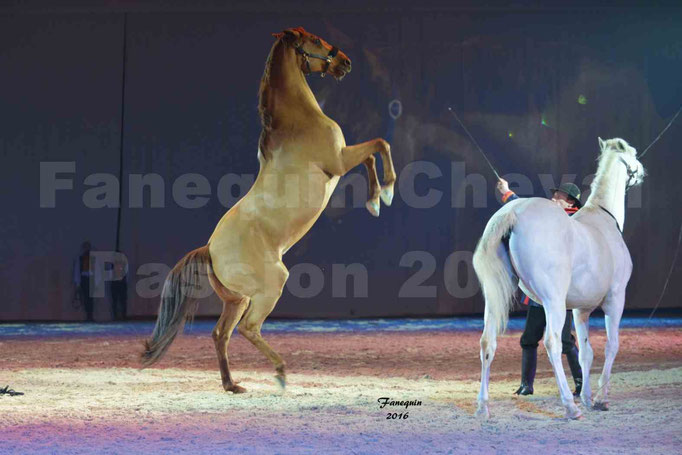 Cheval Passion 2016 - Gala des Crinières d'OR - ASSIRE BECAR -
