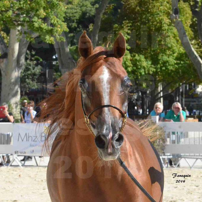 Concours national de Nîmes - MYSS SASKIA - Portraits - 10