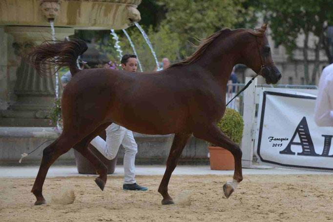 KARAM ALBIDAYER en 2015 - Concours national Nîmes prestige - notre sélection - 13
