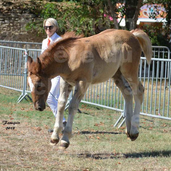 Fête du cheval à GRAULHET le 16 septembre 2018 - Concours Départemental de chevaux de traits - 52