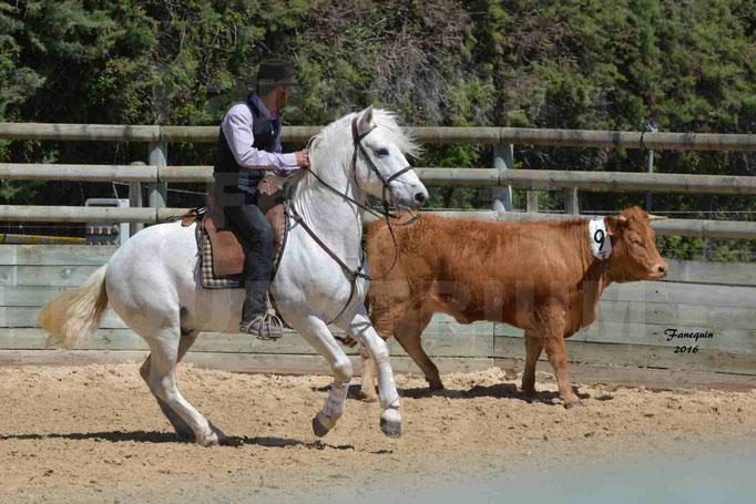 Festival EQUESTRIUM 2016 - Démonstration équitation de travail - cheval CAMARGUE