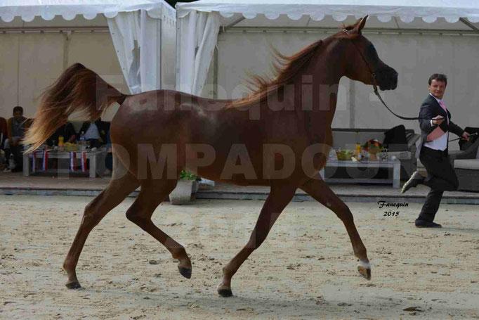 Championnat de FRANCE des chevaux ARABES à Pompadour - PEARL DE DJOON - Notre Sélection - 04
