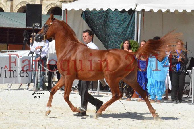 Concours National de Nîmes de chevaux ARABES 2014 - Notre Sélection - PRIAM DE DJOON - 04