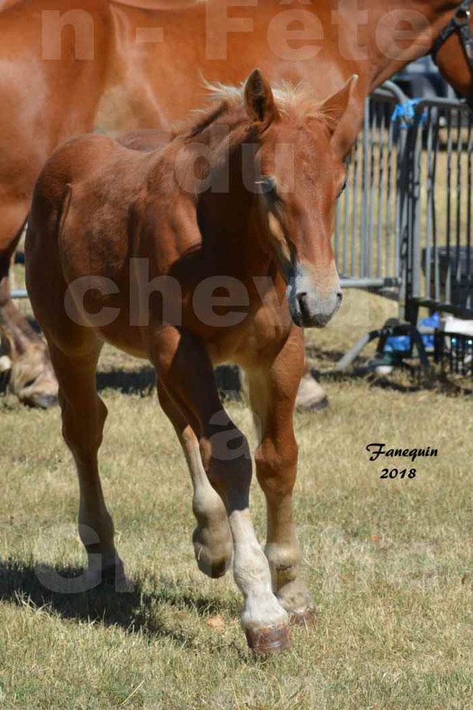 Fête du cheval à GRAULHET le 16 septembre 2018 - Concours Départemental de chevaux de traits - 48