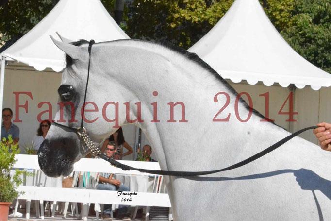 Concours National de Nîmes de chevaux ARABES 2014 - Notre Sélection - Portraits - NADJYK DES AUBUS - 3