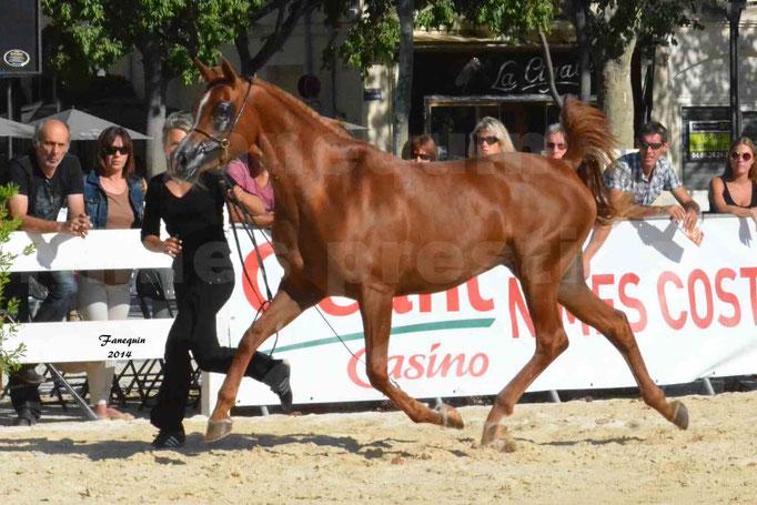 Concours national de Nîmes - MYSS SASKIA - Notre Sélection - 10