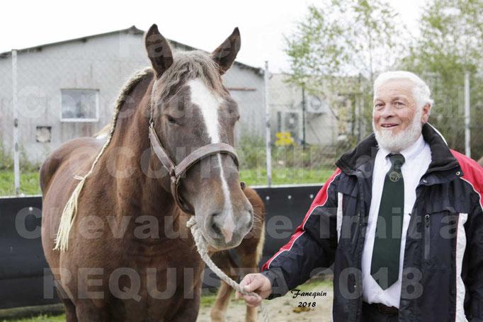 """Concours Régional """"OCCITANIE"""" Modèles et Allures de chevaux de traits - PORTRAITS"""