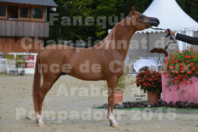 Championnat de FRANCE  de chevaux ARABES 2015 à POMPADOUR - AMJAD AL ADEYAT - 4