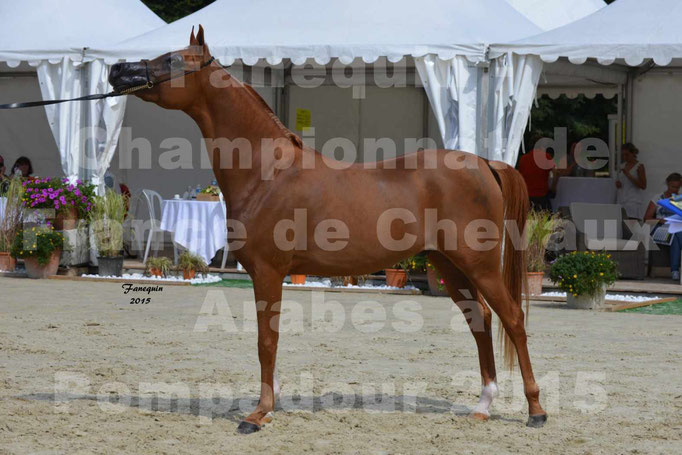 Championnat de FRANCE  de chevaux ARABES 2015 à POMPADOUR - AMJAD AL ADEYAT - 6