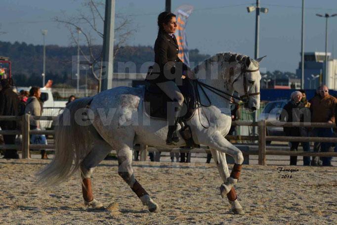Cheval Passion 2016 - Présentation des LUSITANIENS - Échauffement extérieur -  1