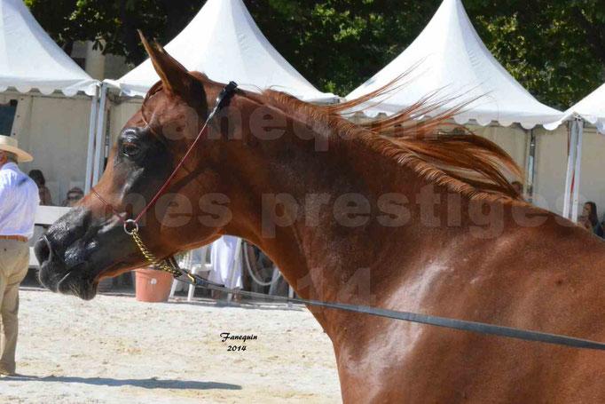 Concours national de Nîmes - MYSS SASKIA - Portraits - 06