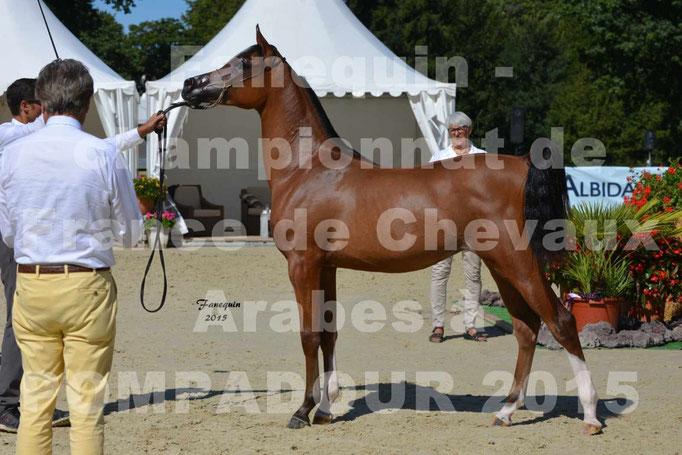 Championnat de FRANCE du cheval ARABE à POMPADOUR 2015 - Classes PROFESSIONNELS - PRIMERIUS EMER - 11