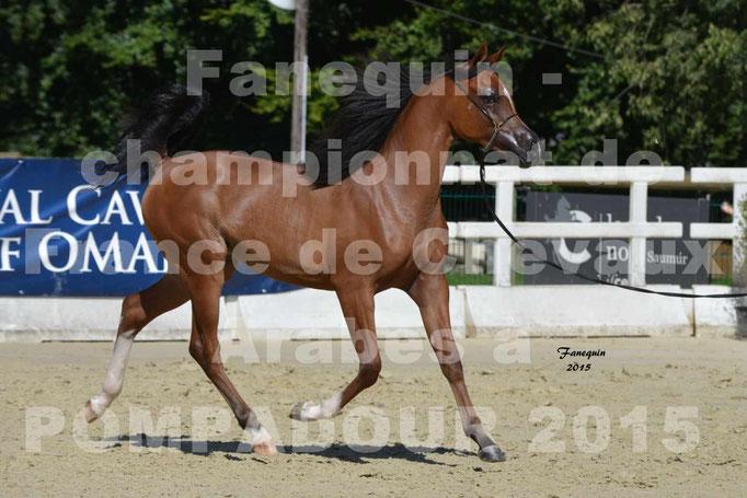 Championnat de FRANCE du cheval ARABE à POMPADOUR 2015 - Classes PROFESSIONNELS - PRIMERIUS EMER - 01