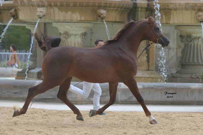 KARAM ALBIDAYER en 2015 - Concours national Nîmes prestige - notre sélection - 11