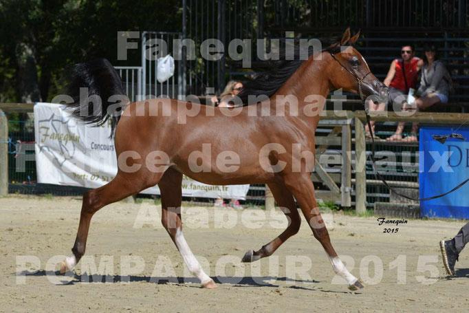 Championnat de FRANCE du cheval ARABE à POMPADOUR 2015 - Classes PROFESSIONNELS - PRIMERIUS EMER - 07