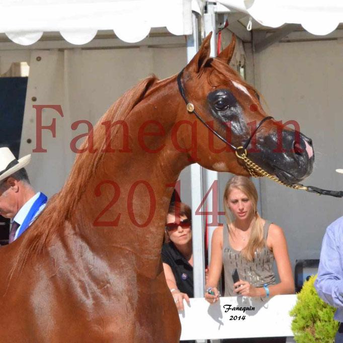 Concours National de Nîmes de chevaux ARABES 2014 - Notre Sélection - Portraits - PRIAM DE DJOON - 07