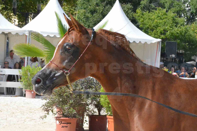 Concours national de Nîmes - MYSS SASKIA - Portraits - 04