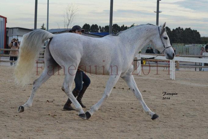 Etalon d'Endurance gris 09