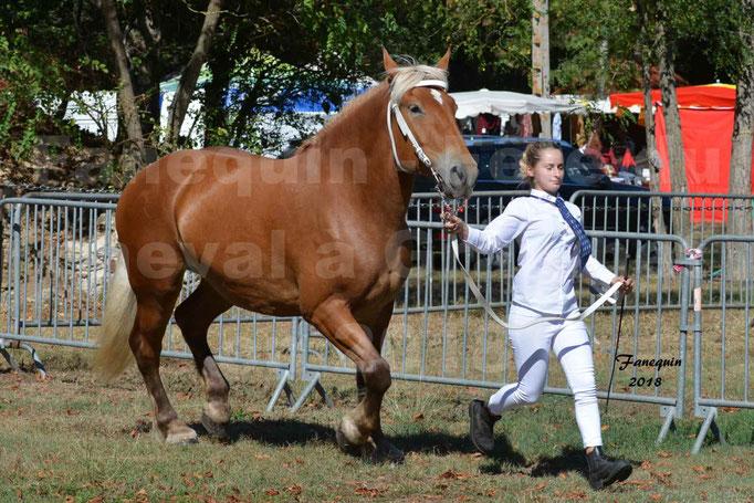 Fête du cheval à GRAULHET le 16 septembre 2018 - Concours Départemental de chevaux de traits - 17