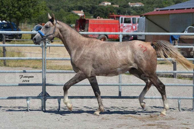 Concours d'Elevage de chevaux Arabes  le 27 juin 2018 à la BOISSIERE - 8