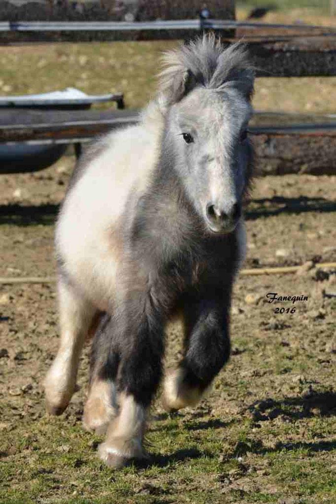 Elevage EL MAGLEP - Groupe de poneys - En Liberté - 15