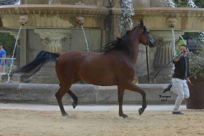 KARAWAN ALBIDAYER en 2015 - Concours national Nîmes prestige - notre sélection - 03