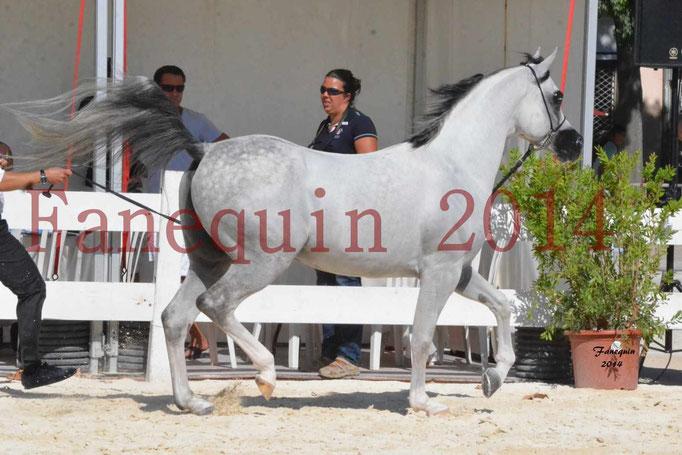 Concours National de Nîmes de chevaux ARABES 2014 - Notre Sélection - NADJYK DES AUBUS - 12